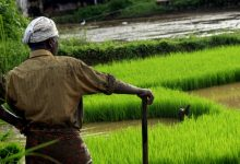 Agricultural Sector: The Indestructible Backbone of Indian Economy