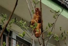 Woman finds mysterious headless animal on a tree branch. It was actually a croissant