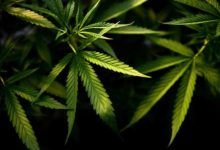 Virginia governor signs bill to legalise marijuana possession from July 1