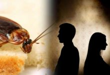 Bhopal: Cockroach between husband and wife, till divorce reached