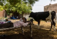 UP village takes to open-air Covid care under tree as locals die with no oxygen