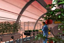 Farming beyond Earth: Scientists figure out ways to water plants in outer space