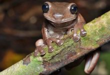 Meet 'chocolate frog': This newly discovered species is straight out of Harry Potter world