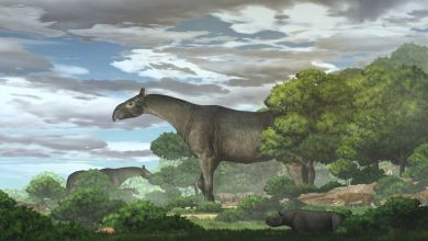 Fossils from China show new species of extinct giant rhino that roamed Asia