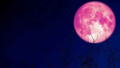 Strawberry Moon on June 24: All you need to know about the celestial event