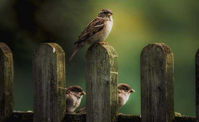 Don't feed birds from balcony, it creates nuisance for neighbours: Mumbai civil court