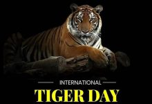 International Tiger Day: Date, history, significance, celebration, theme, messages, images and quotes