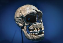 Just 7% of our DNA is unique to modern humans, study shows