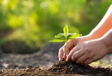 Plant trees, win rewards: UP govt launches contest to target plantation of 30 crore saplings