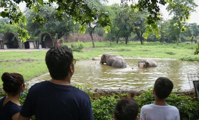 Delhi zoo reopens in two shifts after 3 months, ticket booking goes online