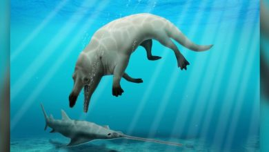 Egyptian Palaeontologists Uncover Fossil of Fearsome Four-Legged Whale, Name It After God of Death
