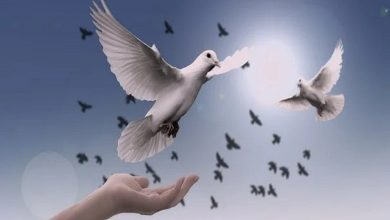 International Day Of Peace 2021: Why This Day Is Celebrated?